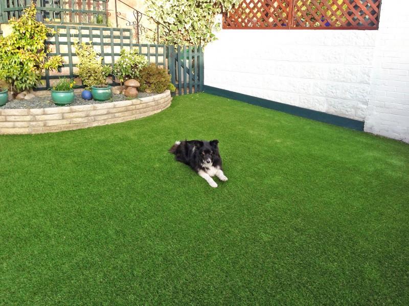 Hextable Grass